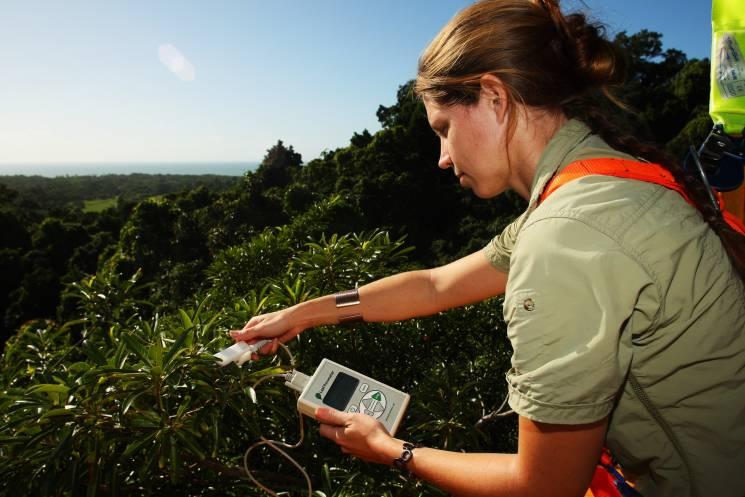 Un científico en Cape Tribulation, Australia monitorea el cambio climático.