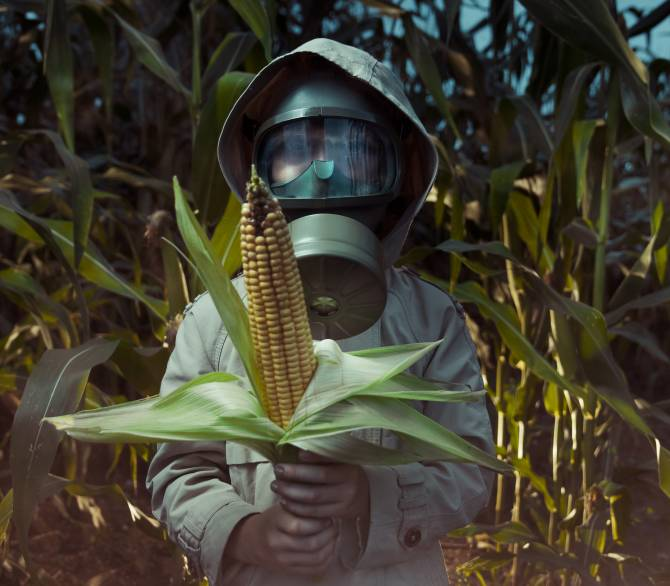 Worker dressed to avoid pesticide pollution on corn;